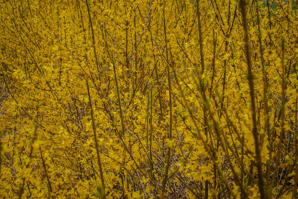 Great yellow!
