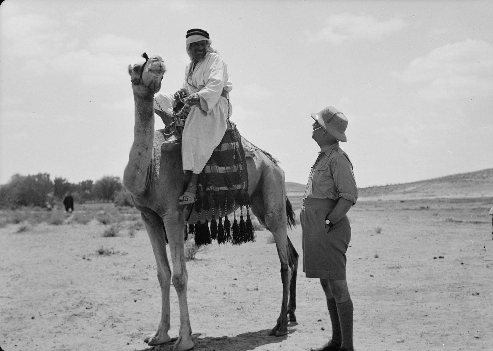 Доктор В.Л. Фергюсон разговаривает с бедуином на верблюде
