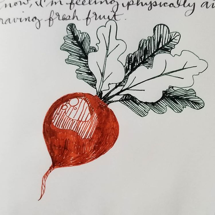"A drawing of a dark orange-colored radish with green-black leaves, rendered in fountain pen ink. Above the drawing, a bit of cursive writing can be seen: ""now I'm feeling physically antsy... craving fresh fruit..."""