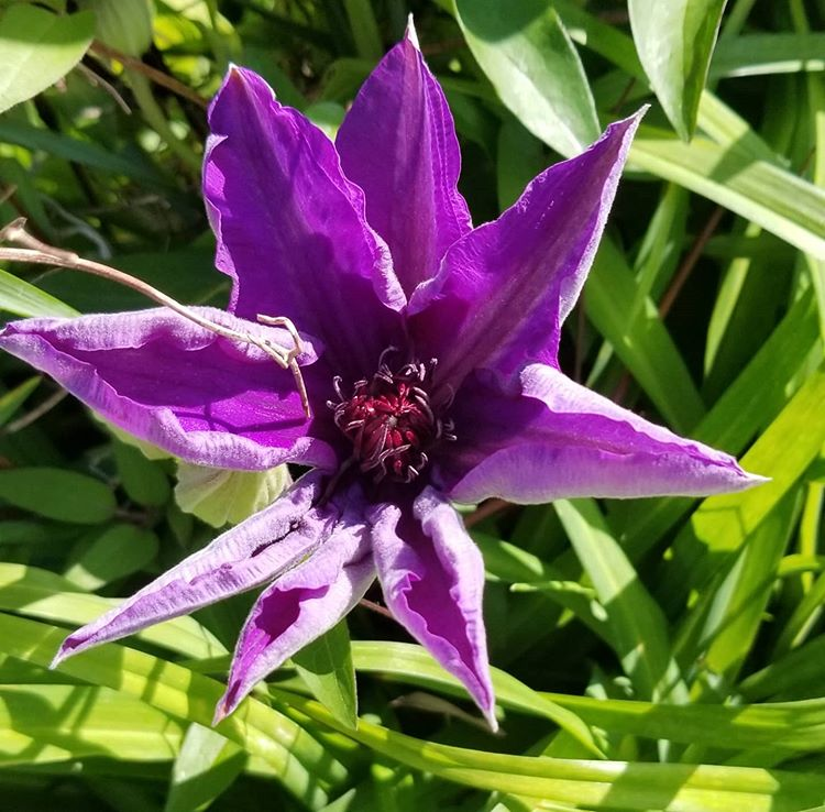 A brilliant purple flower
