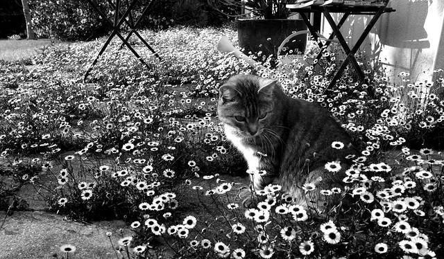 Juni dans son jardin - 4 ...