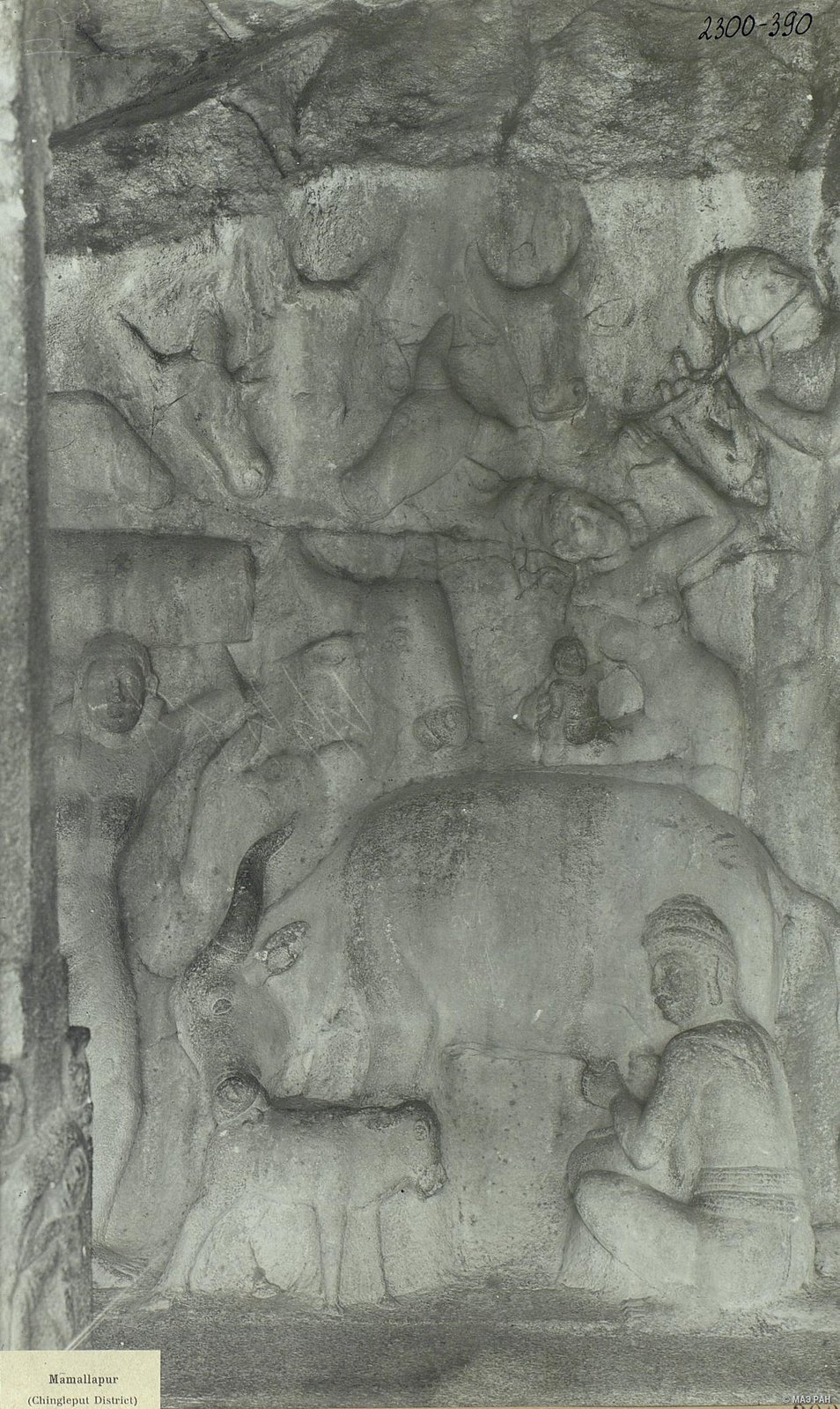 24. Мамаллапур (деталь рельефа «Доильщик и корова с теленком»)