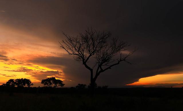 Sunset - Londolozi - South Africa