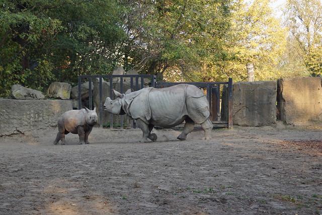 nosorożce zoo