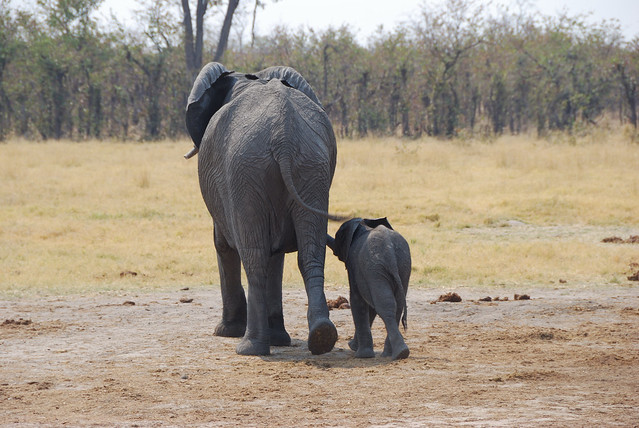 Botswana-Savuti_10-elefanti