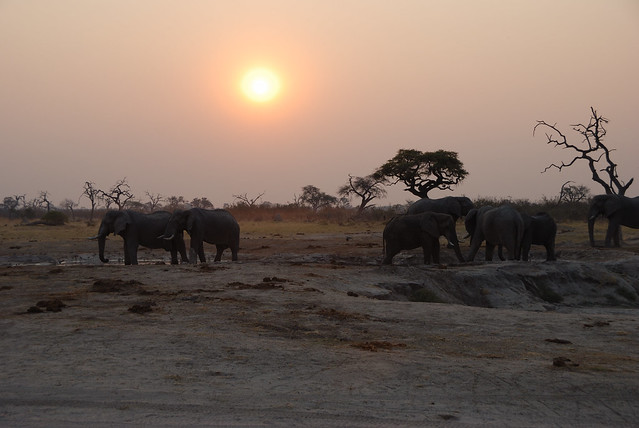 Botswana-Savuti_12-elefanti