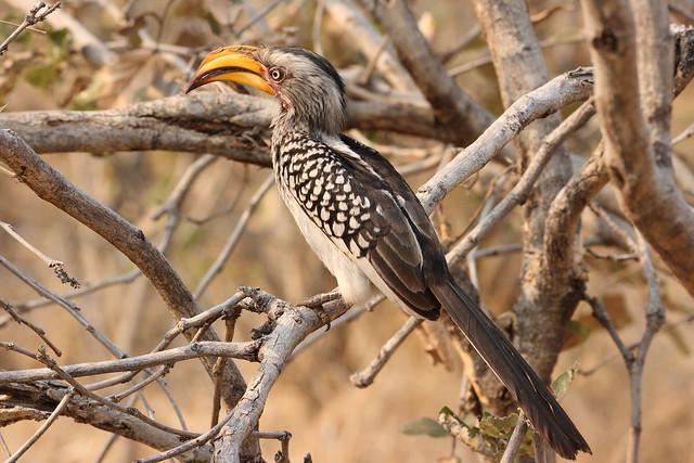 Botswana-Savuti_18-uccelli