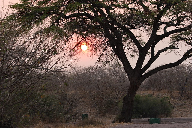 Botswana-Savuti_33-tramonto-acacia