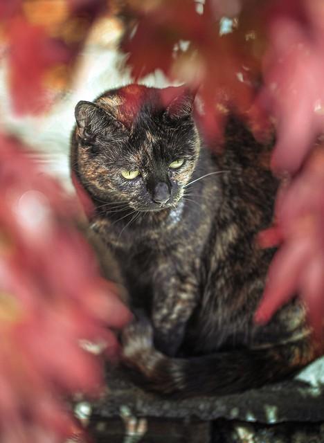Shy Daisy - hidden in red leaves 🍁🍂