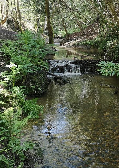 Chewton bunny brook