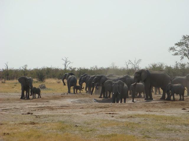 Botswana-Savuti_07.-elefantiJPG