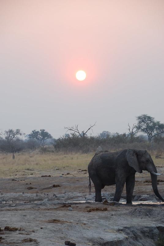 Botswana-Savuti_13-elefanti