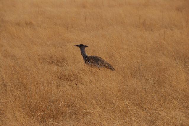 Botswana-Savuti_17-uccelli