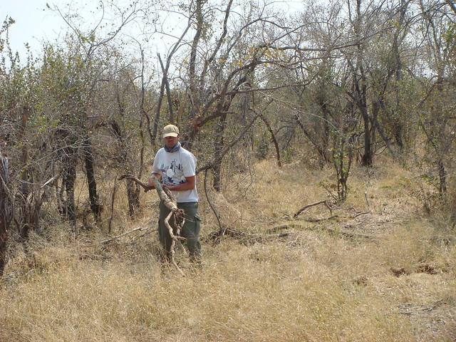 Botswana-Savuti_32-raccolta-legna