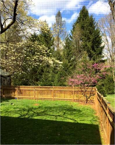 baltimore maryland backyard trees dogwood redbud spruce fences shadows shadowplay screening iphone hss