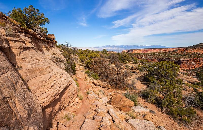 Black Ridge Trail View