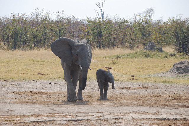 Botswana-Savuti_06-elefanti
