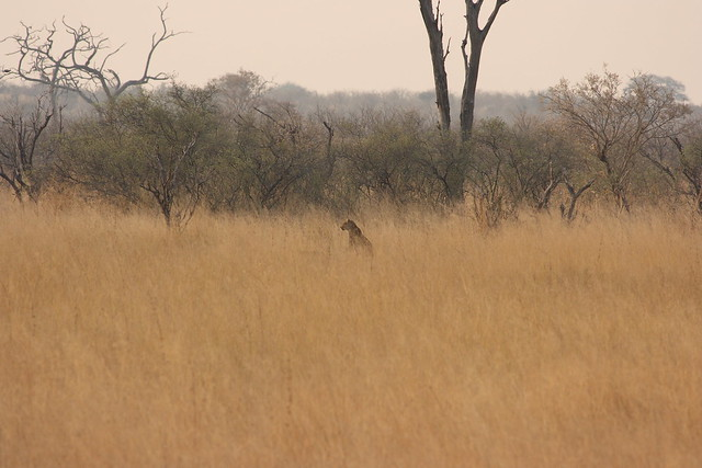 Botswana-Savuti_26-leopardo