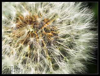 Garden Macro-7.jpg | by Graham Hilling and The Concrete Shell!