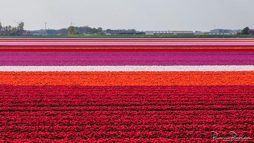 April Colors