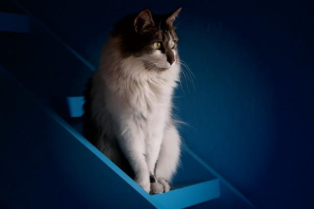 Katty's mysterious gaze