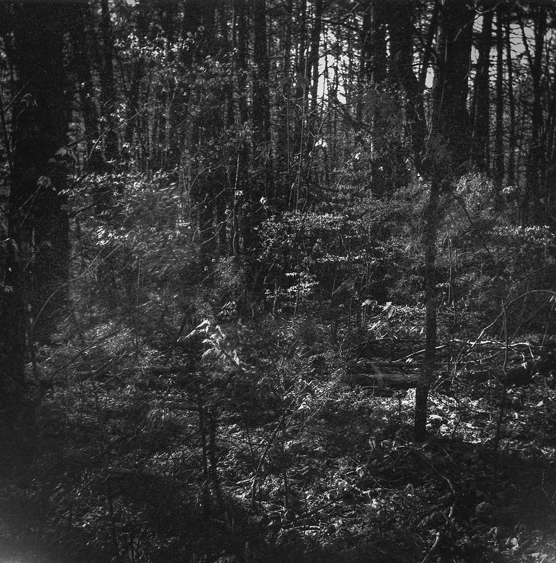 deep in the woods, late light, Richmond Hill Park, Asheville, NC, Bencini Koroll, Ilford FP4+, Moersch Eco Film Developer, mid April 2020