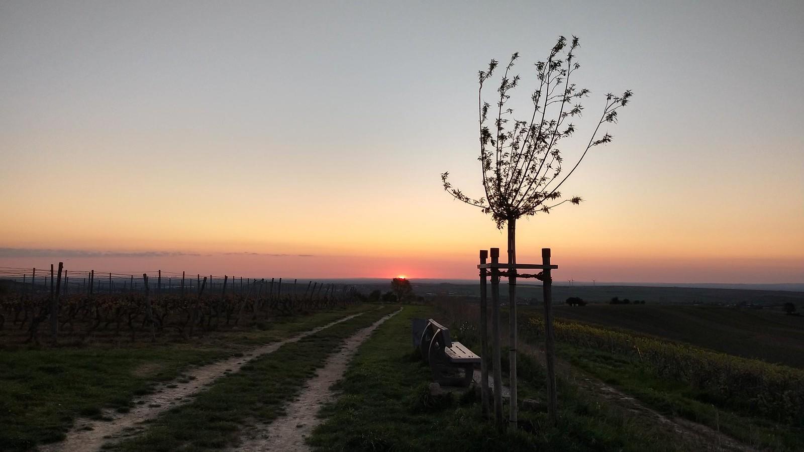 SunriseRun auf der Hiwweltour Zornheimer Berg & Brötchenexpress