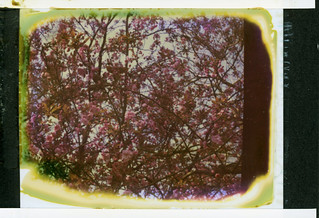 Hanami ... First try with One Instant peel apart film