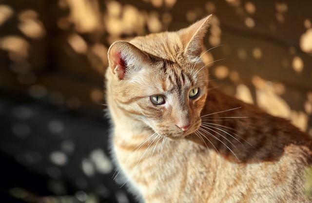 Ginger Leo