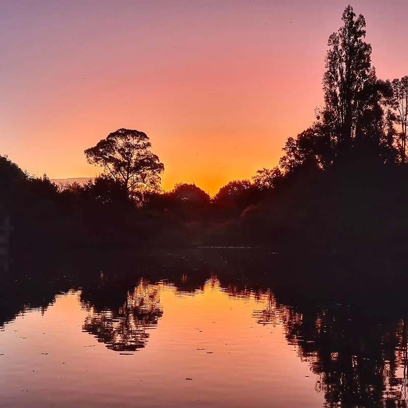 111/366 20th April 2020Pink sky at night...#turtlelake @hamiltongardens #bubblewalk #hauora #covid19nz