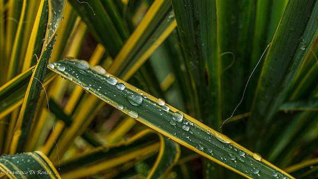 drops my garden .)2003/4636-6