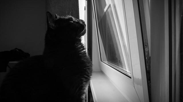 Furry observer.