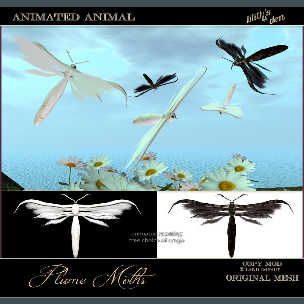 Lilith's Den – Plume Moths