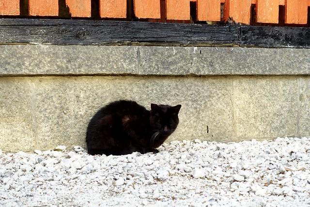 Today's Cat@2020ー04ー20