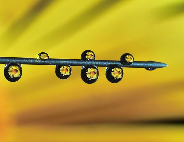 P2200233-Macro Monday Yellow-