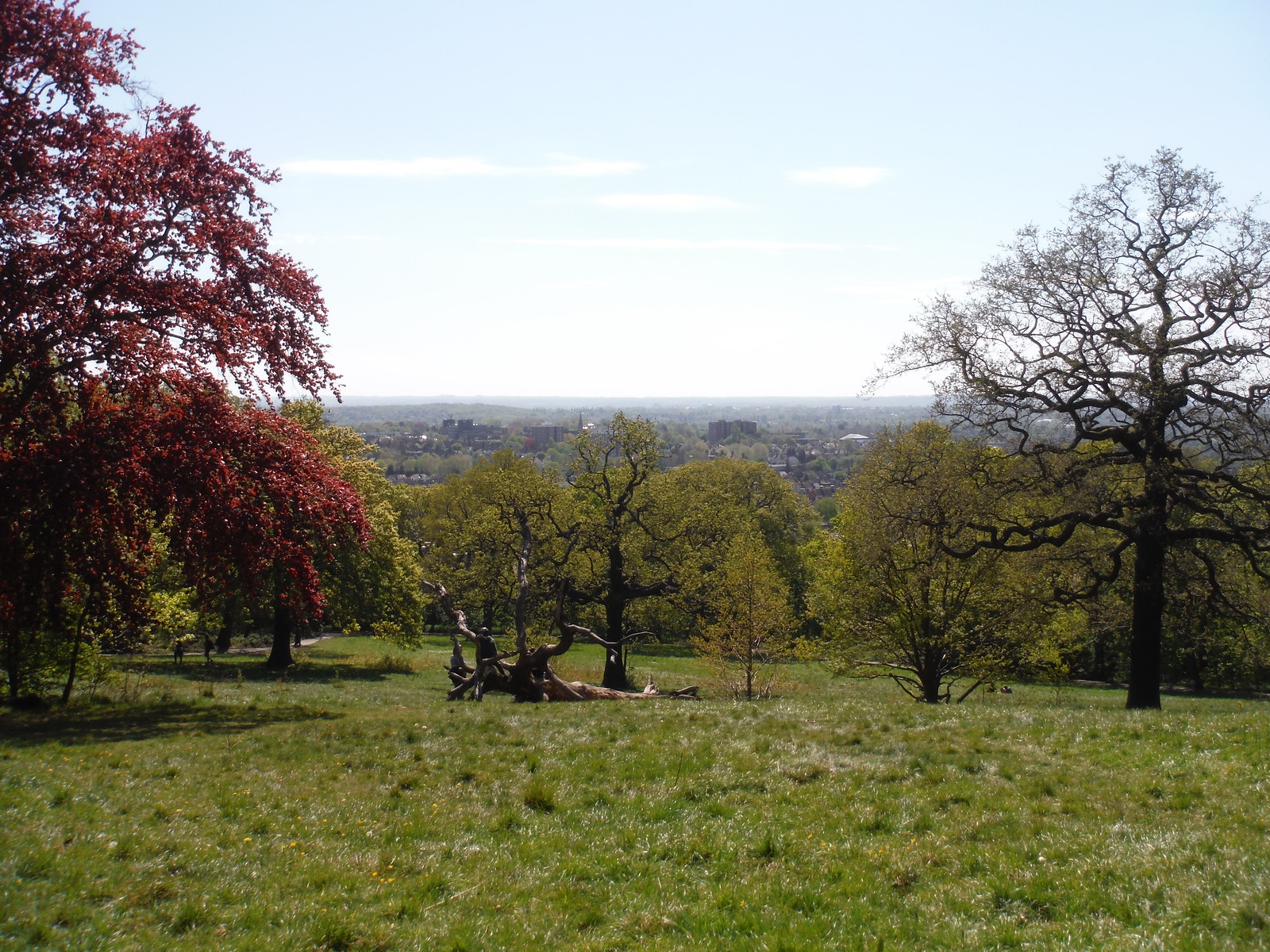 Meadow below Castle Wood, Views of Eltham SWC Short Walk 44 - Oxleas Wood and Shooters Hill (Falconwood Circular)