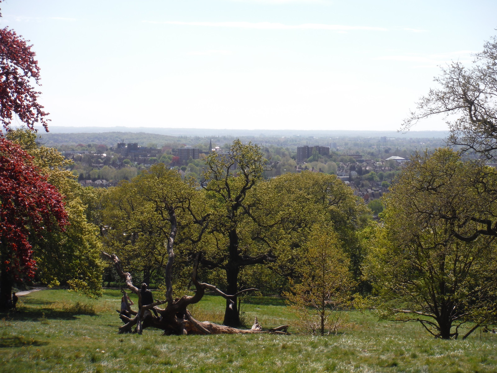 Meadow below Castle Wood SWC Short Walk 44 - Oxleas Wood and Shooters Hill (Falconwood Circular)
