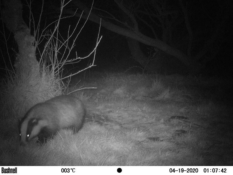 Badger 14