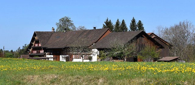 Bauernhof Farm