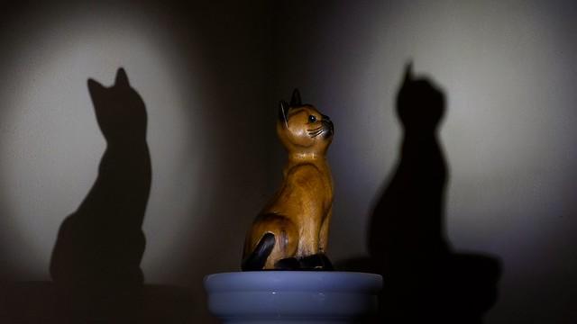 Le chat dows ou shadows