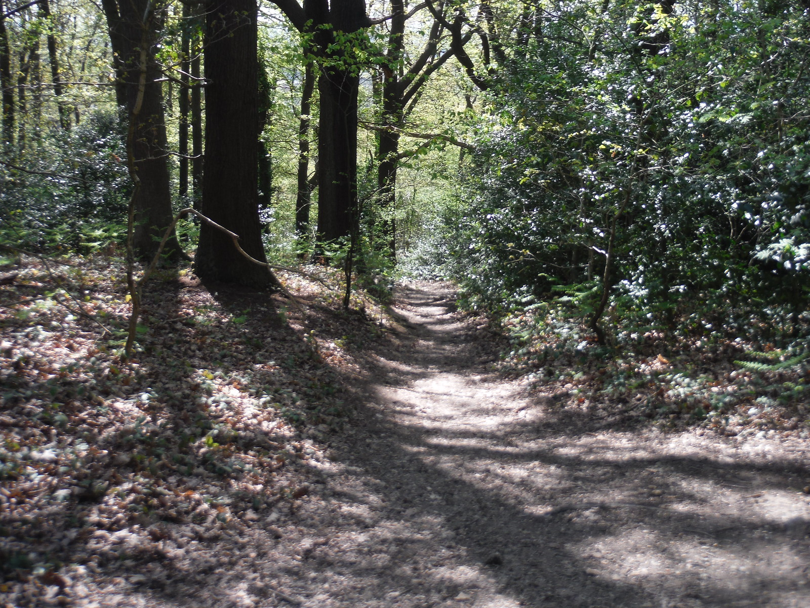 Back into Jack Wood SWC Short Walk 44 - Oxleas Wood and Shooters Hill (Falconwood Circular)