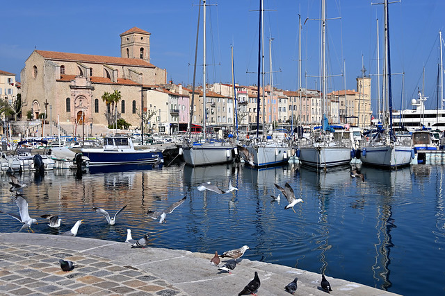 La Ciotat harbor / Bird day / Covid-19