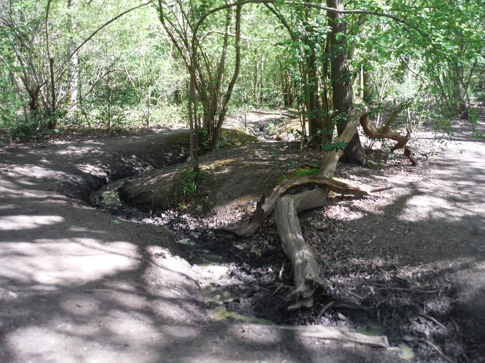 Streamlet in Oxleas Wood SWC Short Walk 44 - Oxleas Wood and Shooters Hill (Falconwood Circular)