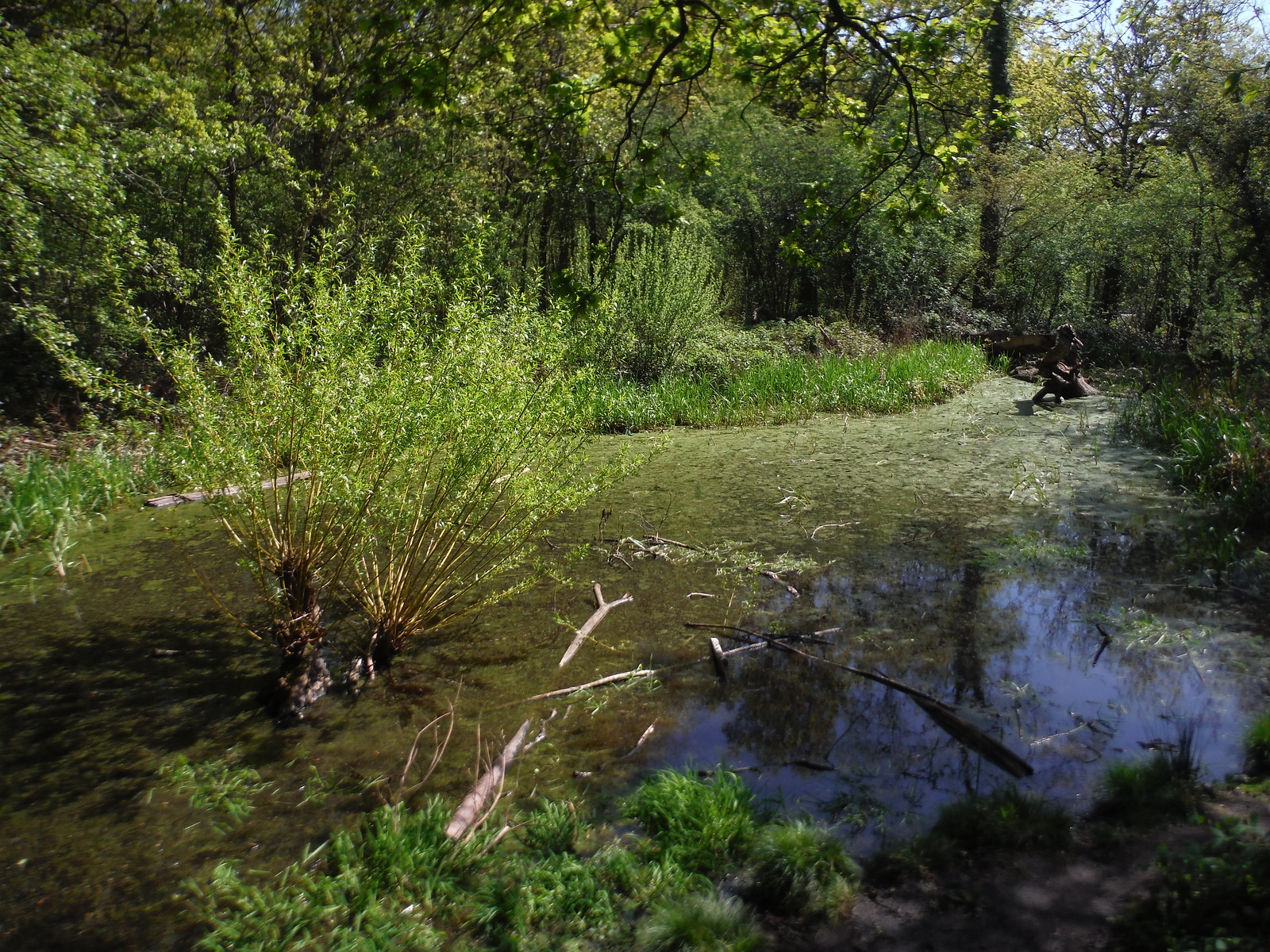 Pond off Green Chain Walk, Oxleas Wood SWC Short Walk 44 - Oxleas Wood and Shooters Hill (Falconwood Circular)