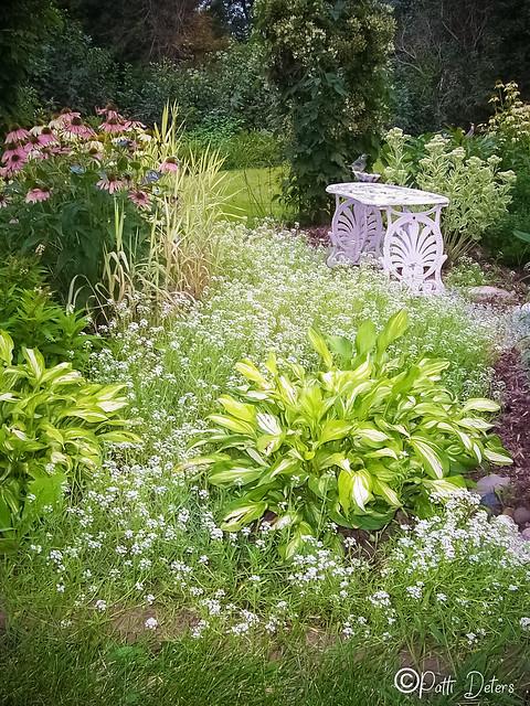 My Summer White Garden