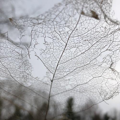 net to catch a falling sky