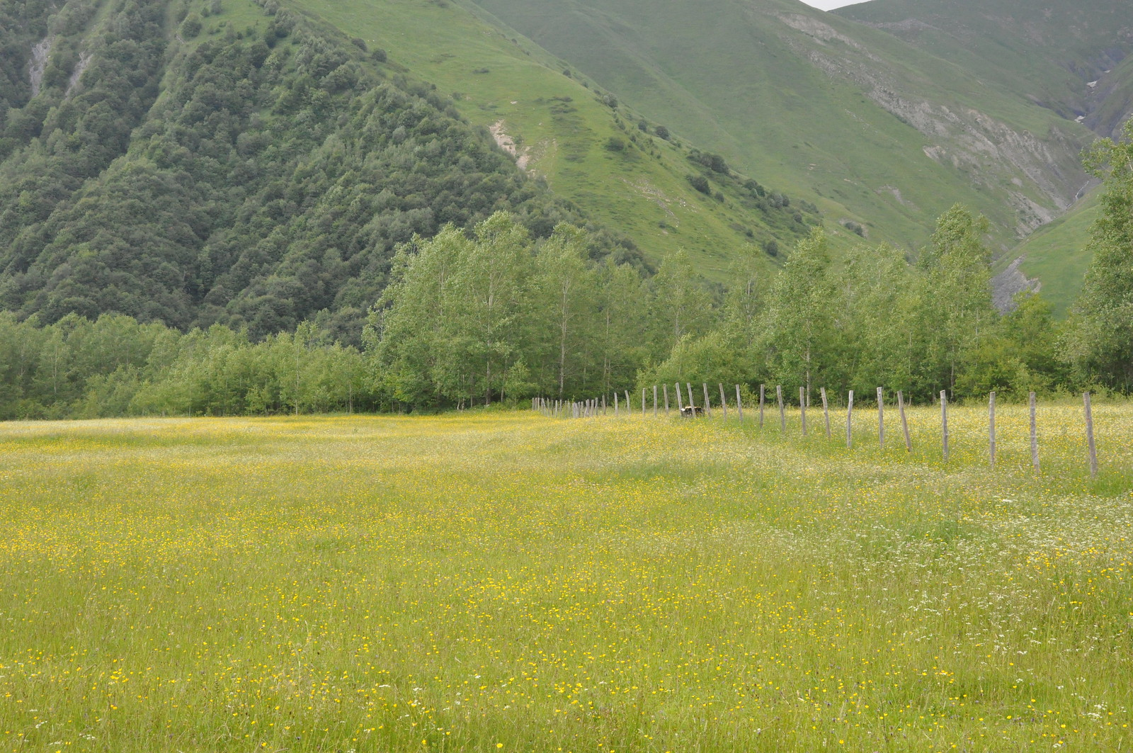 The Khada Valley, Nature