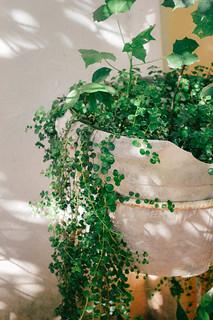 Plantas caindo