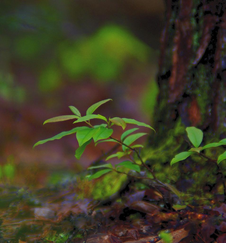Forest Rain Color  (Explored 4/23)