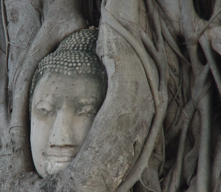 La cabeza de Buda atrapado por ramas y raíces de una higuera en Ayutthaya (Tailandia)